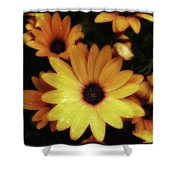 Shower Curtain featuring the photograph Black Eyed Susans. Looks Like They're by Mr Photojimsf