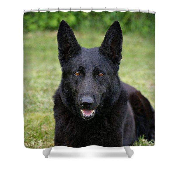 Black German Shepherd Dog II Shower Curtain