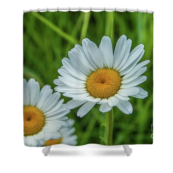 Black-headed Daisy's Shower Curtain