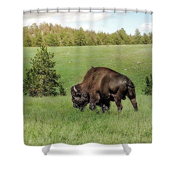 Black Hills Bull Bison Shower Curtain