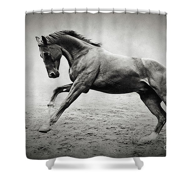 Black Horse In Dust Shower Curtain