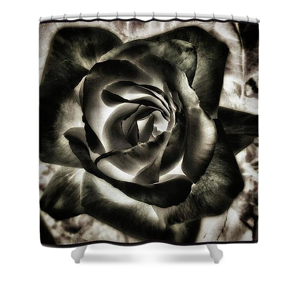 Shower Curtain featuring the photograph Black Rose. Symbol Of Farewells by Mr Photojimsf