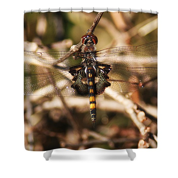 Shower Curtain featuring the photograph Black Saddlebags Dragonfly by William Selander