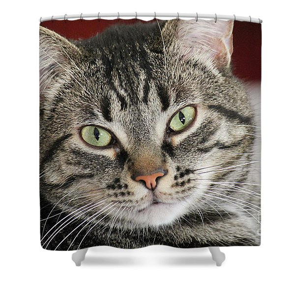 Black Tabby Shower Curtain