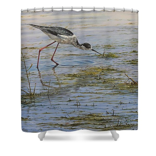 Shower Curtain featuring the painting Black Winged Stilt by Alan M Hunt