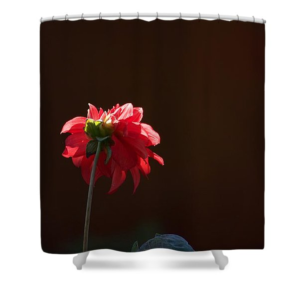 Black With Rose Shower Curtain