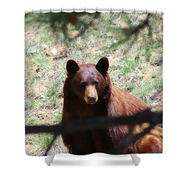 Blackbear1 Shower Curtain