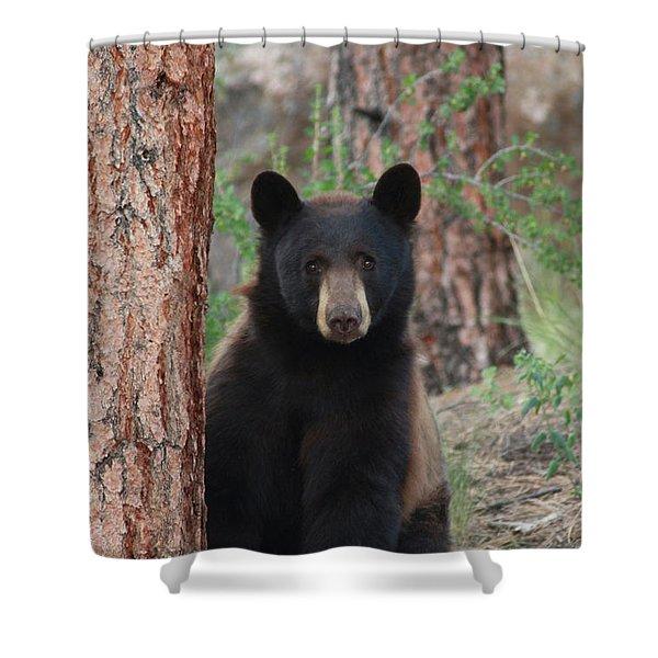Blackbear2 Shower Curtain