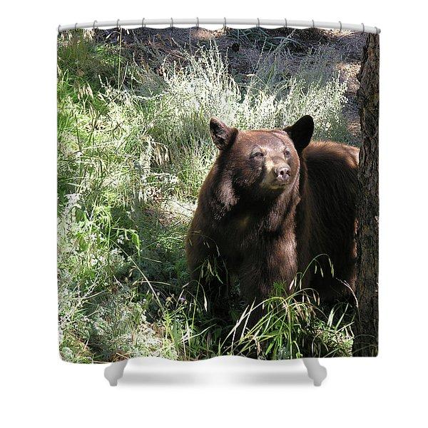 Blackbear3 Shower Curtain