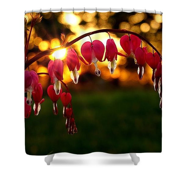 Bleeding Heart Sunset Shower Curtain