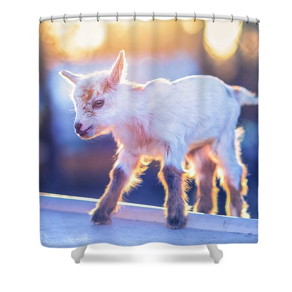 Little Baby Goat Sunset Shower Curtain