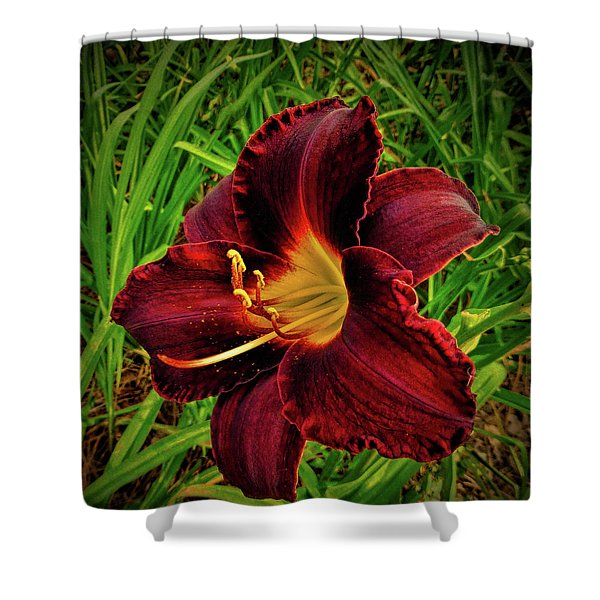 Blood Lily  Shower Curtain