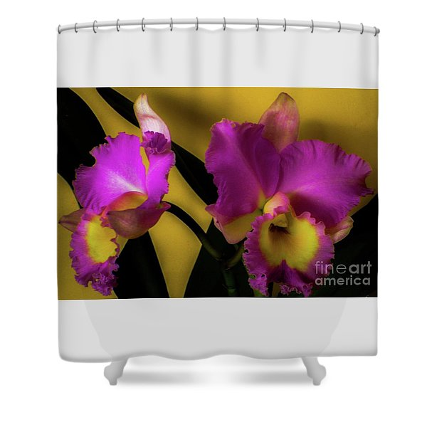 Blooming Cattleya Orchids Shower Curtain