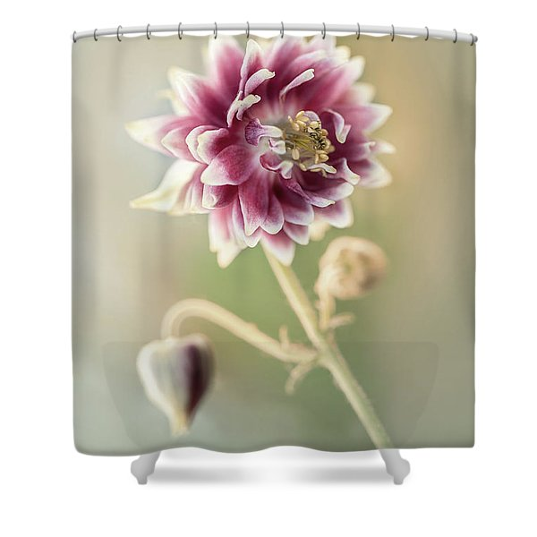 Shower Curtain featuring the photograph Blooming Columbine Flower by Jaroslaw Blaminsky
