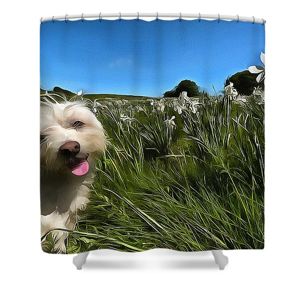 Blooming Daffodils In The Antola Park With Maltese II Paint Shower Curtain