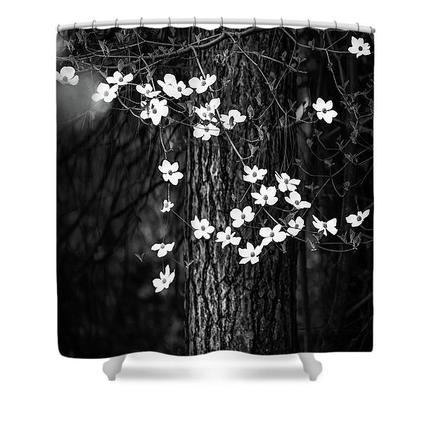 Blooming Dogwoods In Yosemite Black And White Shower Curtain