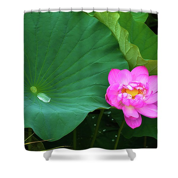 Blooming Pink And Yellow Lotus Lily Shower Curtain