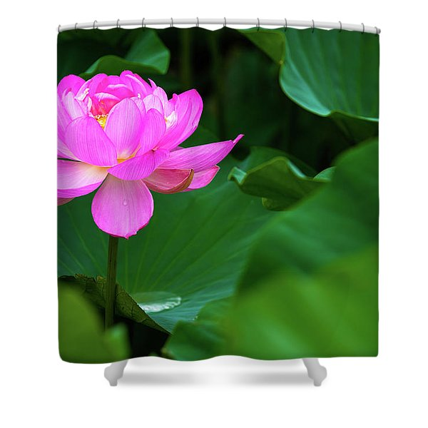 Blooming Pink Lotus Lily Shower Curtain