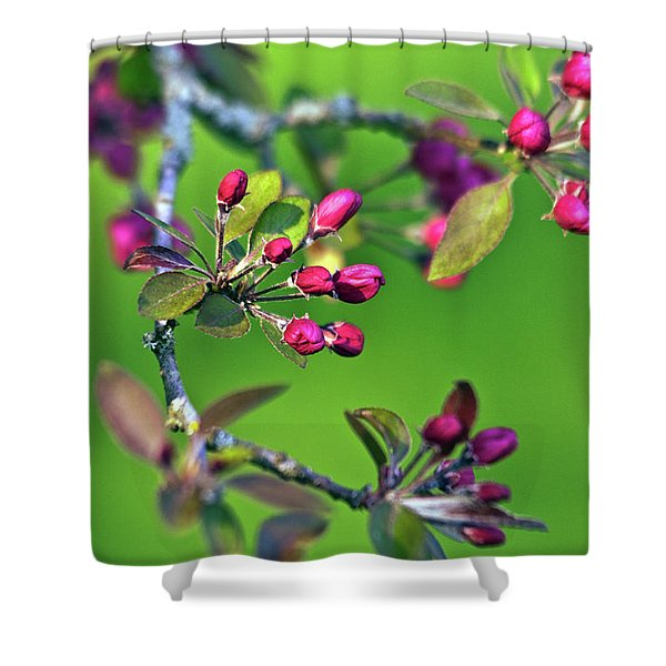 Shower Curtain featuring the photograph Blooming Spring Poetry by Silva Wischeropp