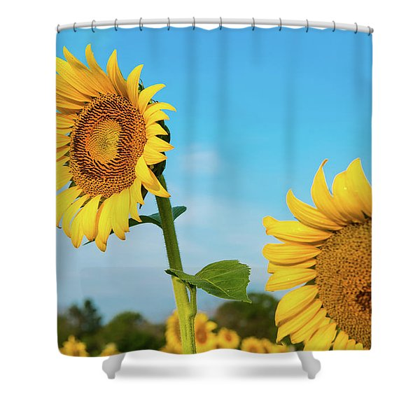 Blooming Sunflower In Blue Sky Shower Curtain