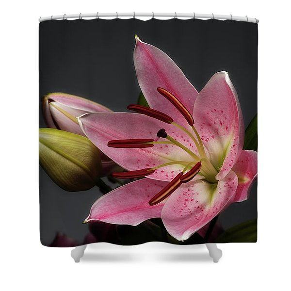 Blossoming Pink Lily Flower On Dark Background Shower Curtain