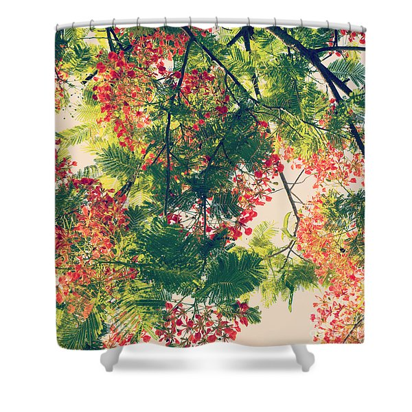 Blossoming Royal Poinciana Tree - Hipster Photo Square Shower Curtain