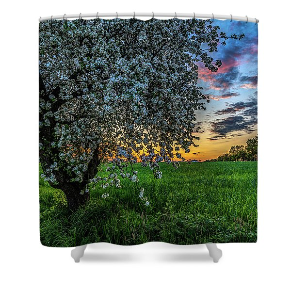 Blossomming Tree By Twiglight Shower Curtain