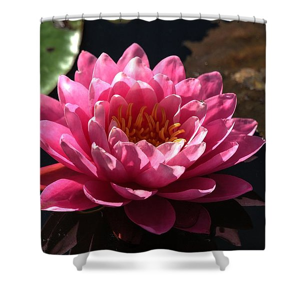 Blossoms And Lily Pads 4 Shower Curtain