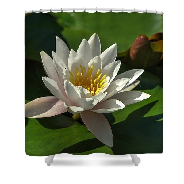Blossoms And Lily Pads 8 Shower Curtain