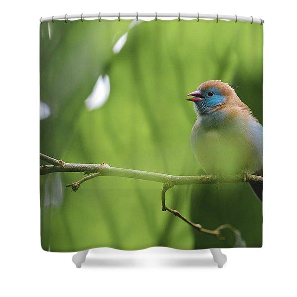Blue Bird Chirping Shower Curtain