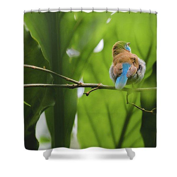 Blue Bird Has An Itch Shower Curtain