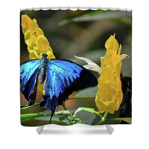Blue Beauty Butterfly Shower Curtain
