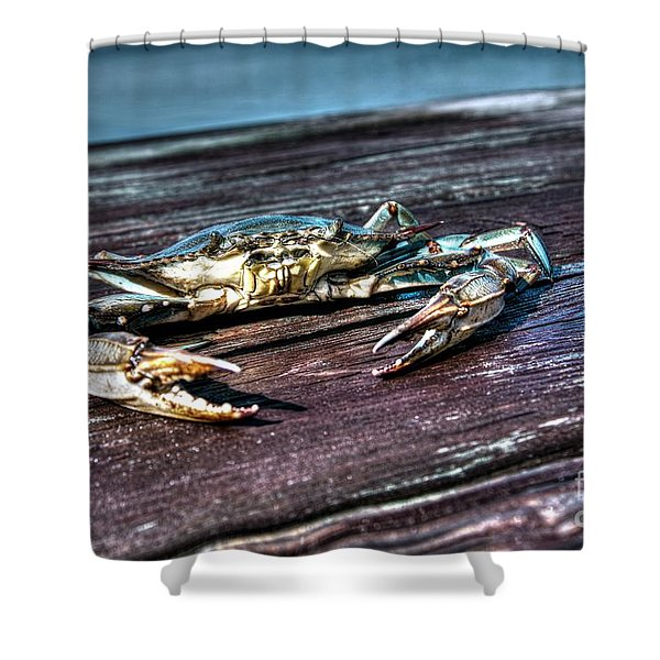 Blue Crab - Above View Shower Curtain