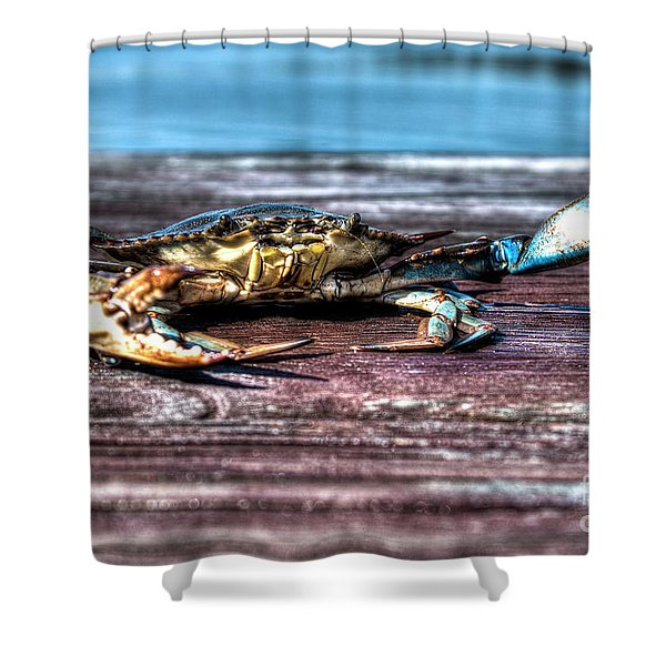 Blue Crab - Big Claws Shower Curtain