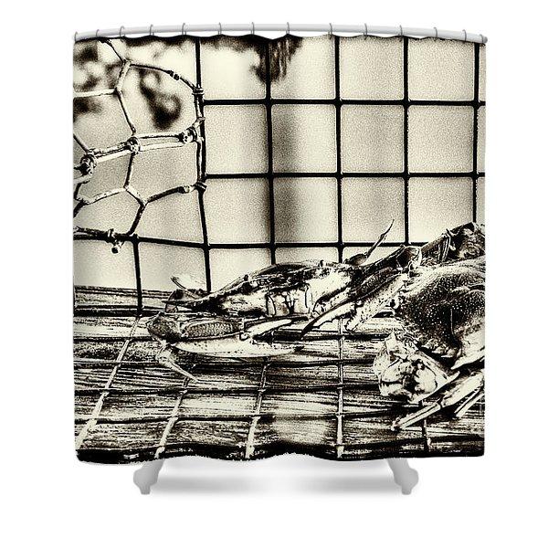 Blue Crabs - Vintage Shower Curtain