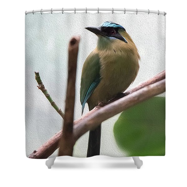 Blue-crowned Motmot Oil Shower Curtain