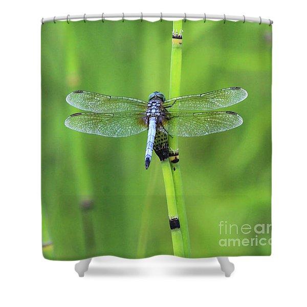 Blue Dasher Shower Curtain