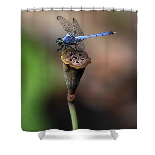 Blue Dragonfly Dancer Shower Curtain