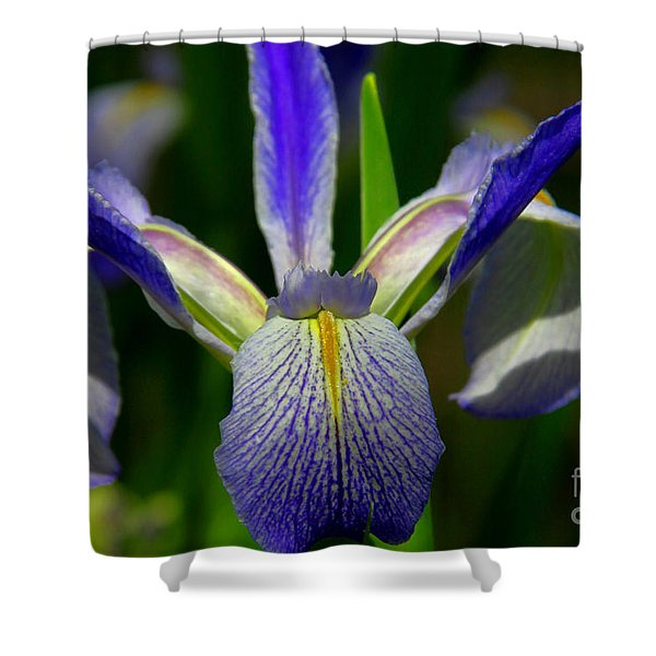 Blue Flag Iris Shower Curtain