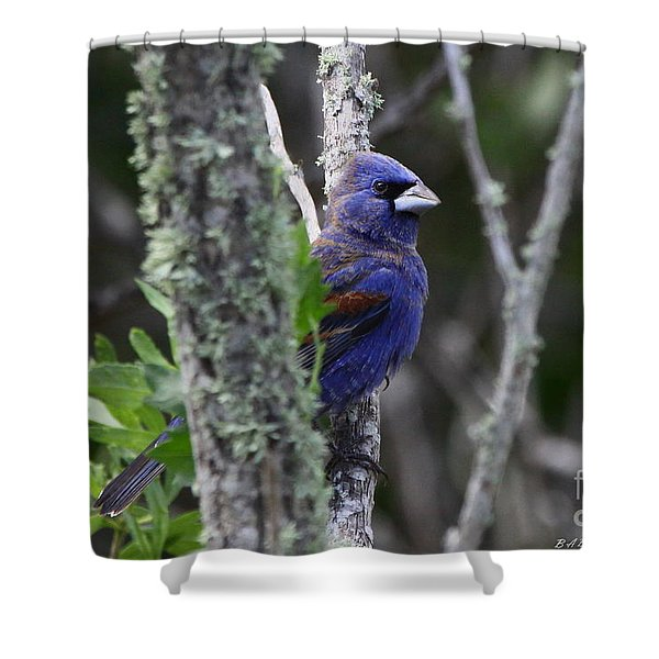 Blue Grosbeak In A Mangrove Shower Curtain