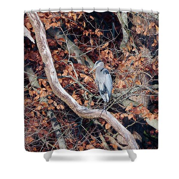 Blue Heron In Tree Shower Curtain