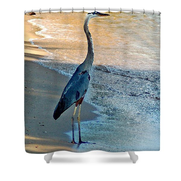 Blue Heron On The Beach Close Up Shower Curtain