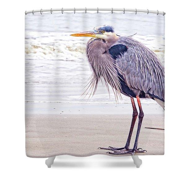 Blue Heron Watching Shower Curtain