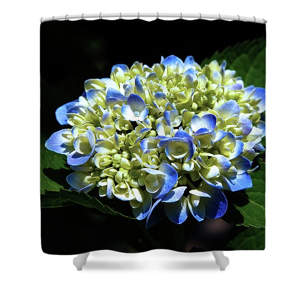 Blue Hydrangea Onstage 2620 H_2 Shower Curtain