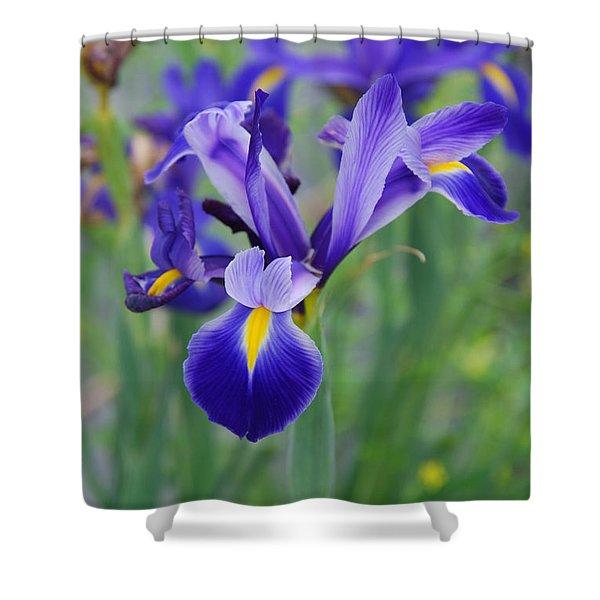 Blue Iris Flower Shower Curtain
