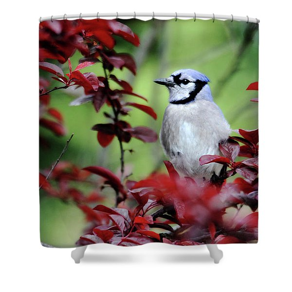 Blue Jay In The Plum Tree Shower Curtain