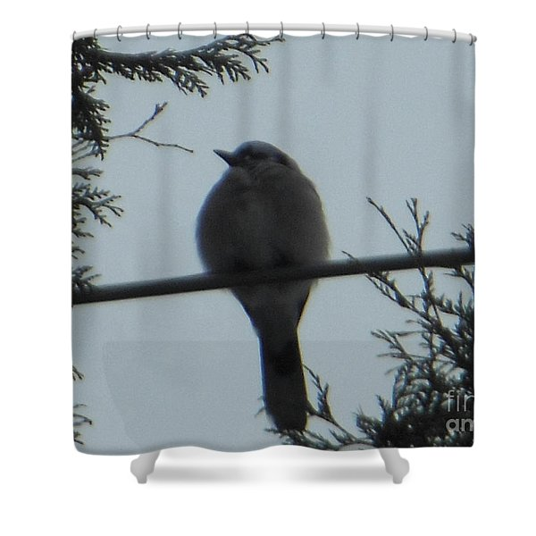Blue Jay On Wire Shower Curtain