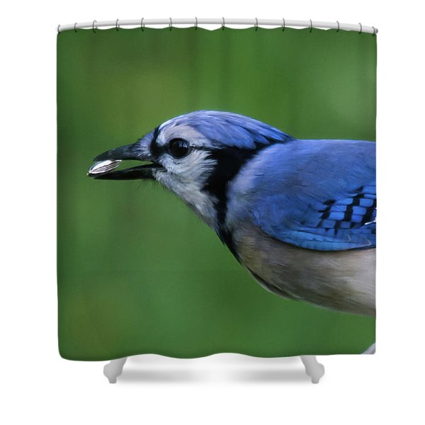 Blue Jay With Seed Shower Curtain