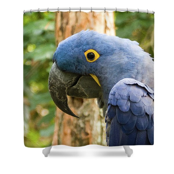 Blue Macaw Shower Curtain