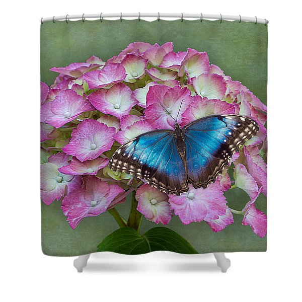 Blue Morpho Butterfly On Pink Hydrangea Shower Curtain